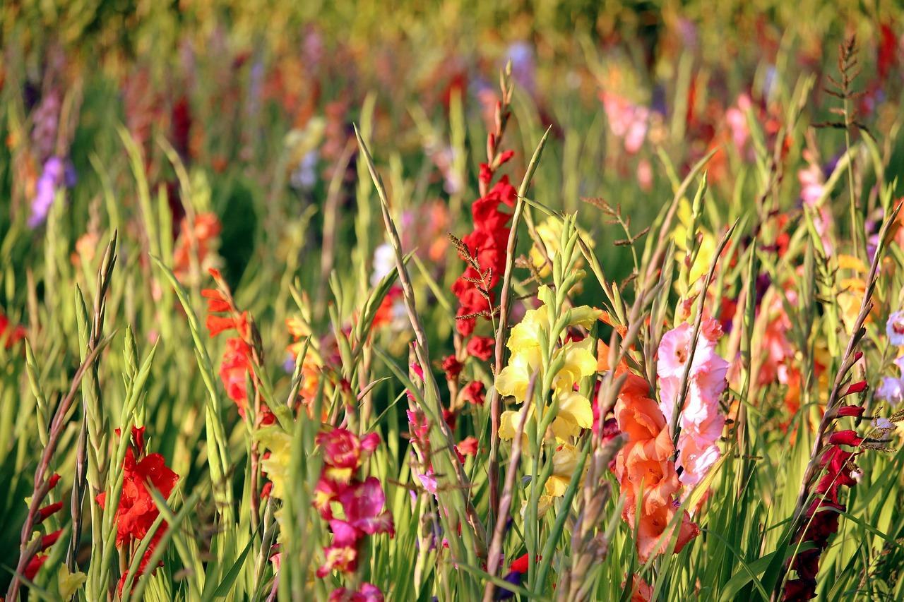 Lilien und Gladiolen im Sommer und Herbst