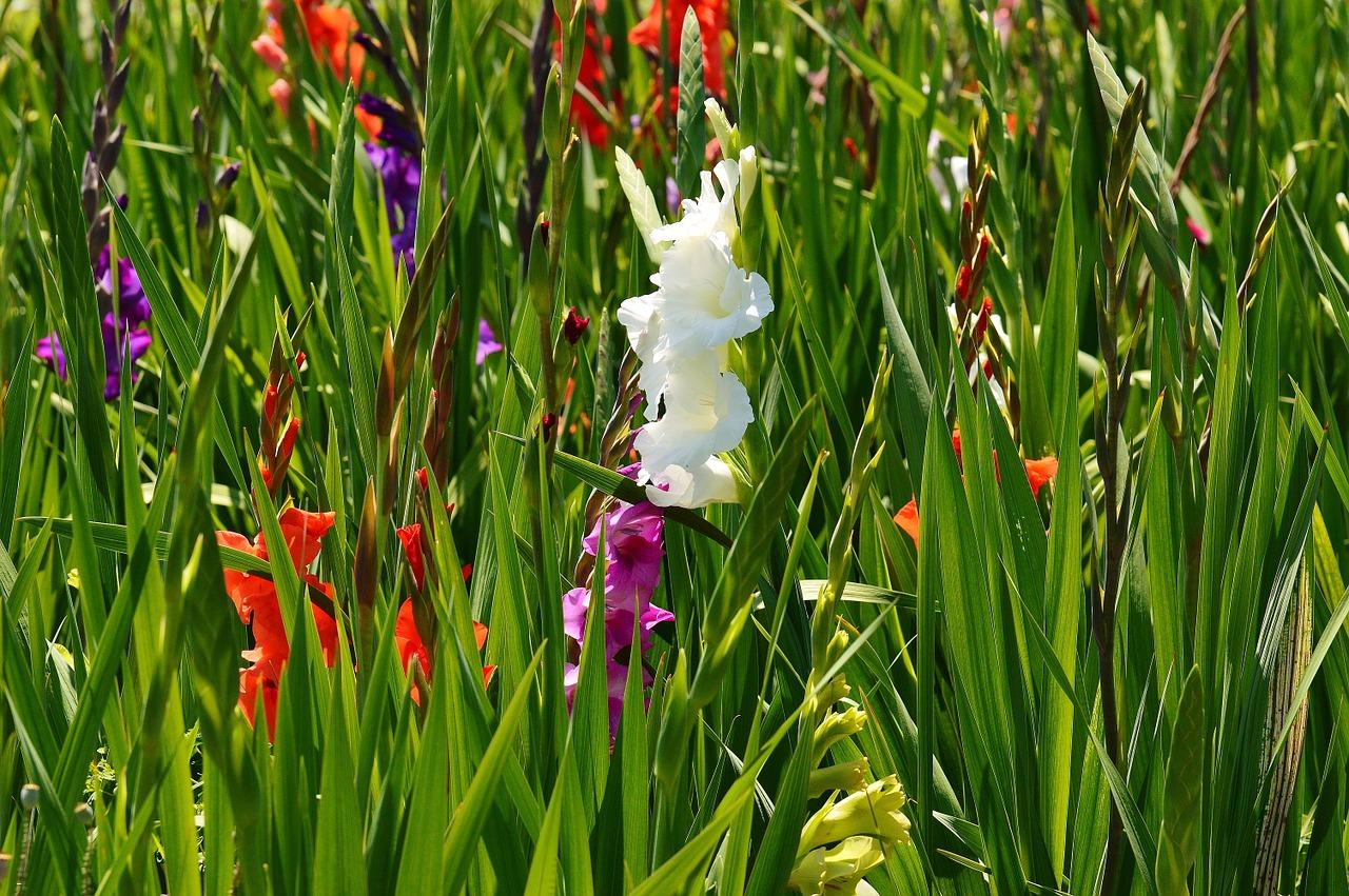 Sommer- und Herbstblüher - Pflanzzeit im Frühling